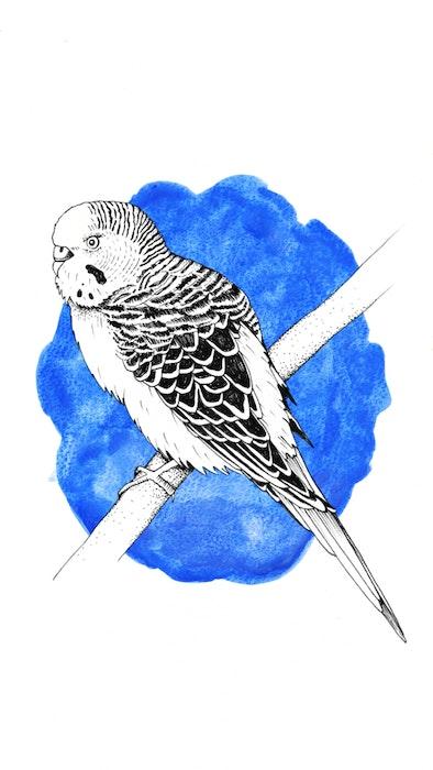 Pet bird sitting on a branch
