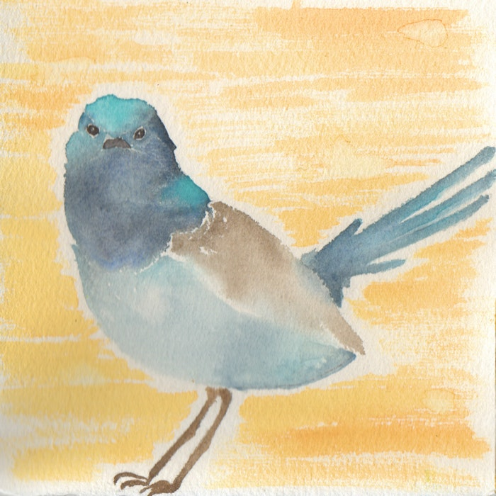 Small blue and brown bird