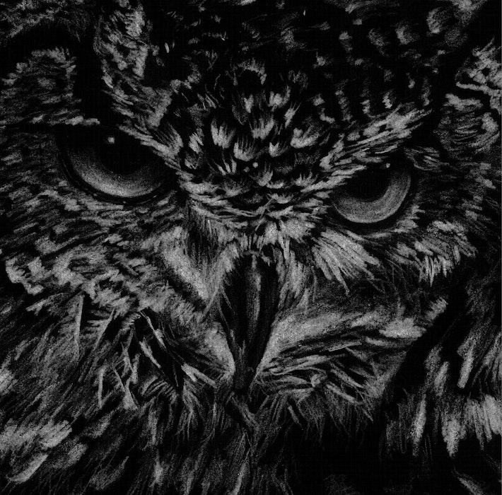 Close-up of the head of an owl
