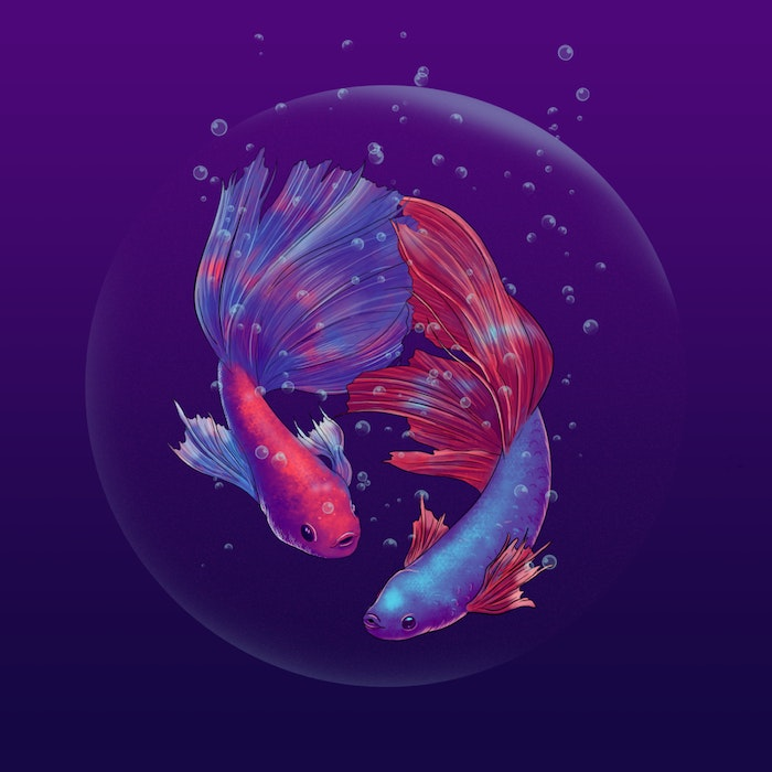 Two colorful fish swimming inside a bubble