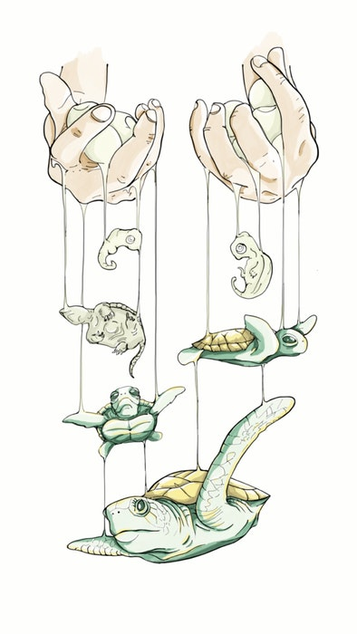 Two hands holding turtles on puppet strings