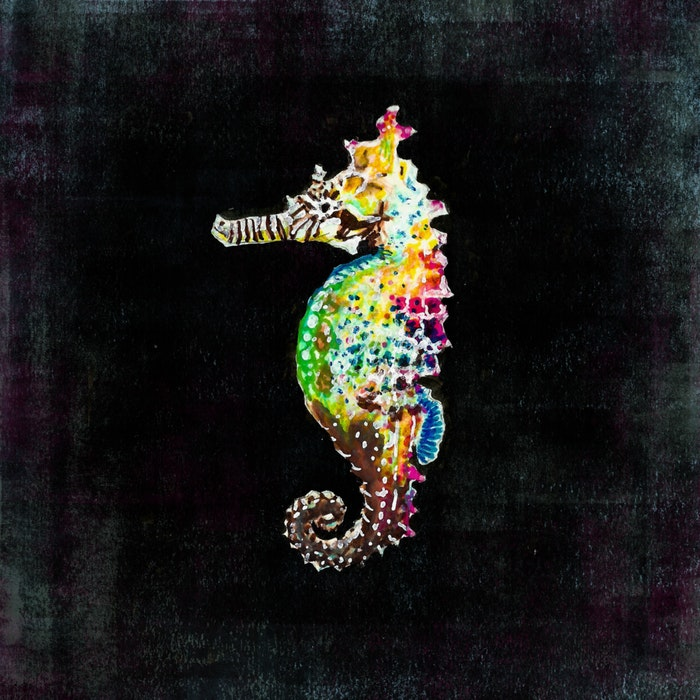 Brightly colored seahorse