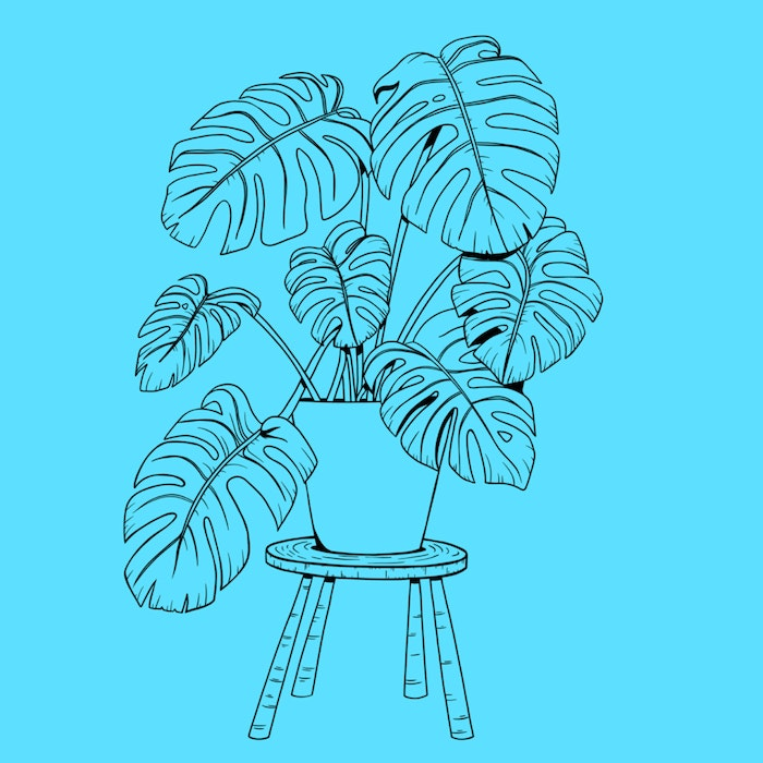 Leafy houseplant on a small stool