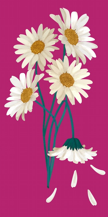 Bouquet of Daisy flowers with one broken stem