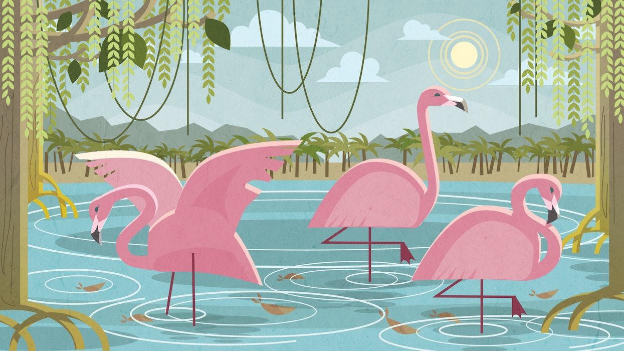 Flamingos at a watering hole