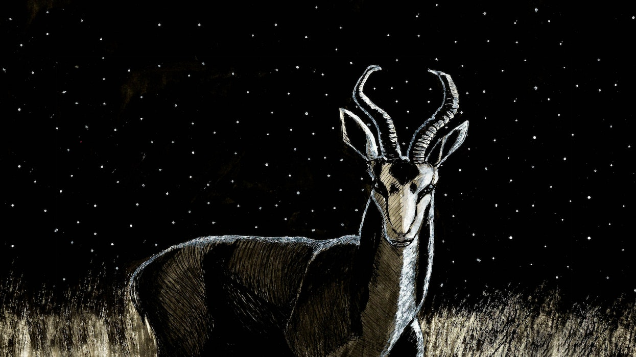 Antelope in a field on a starry night