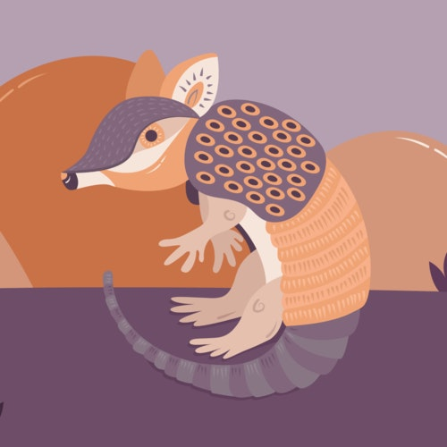 Armadillo alone in the desert