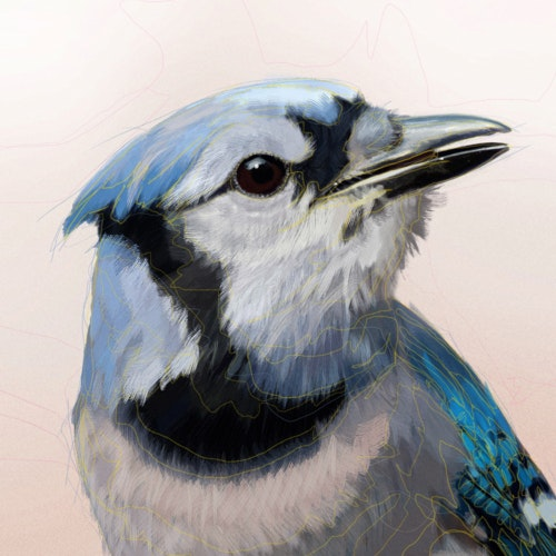 Bird with black, white, and blue feathers