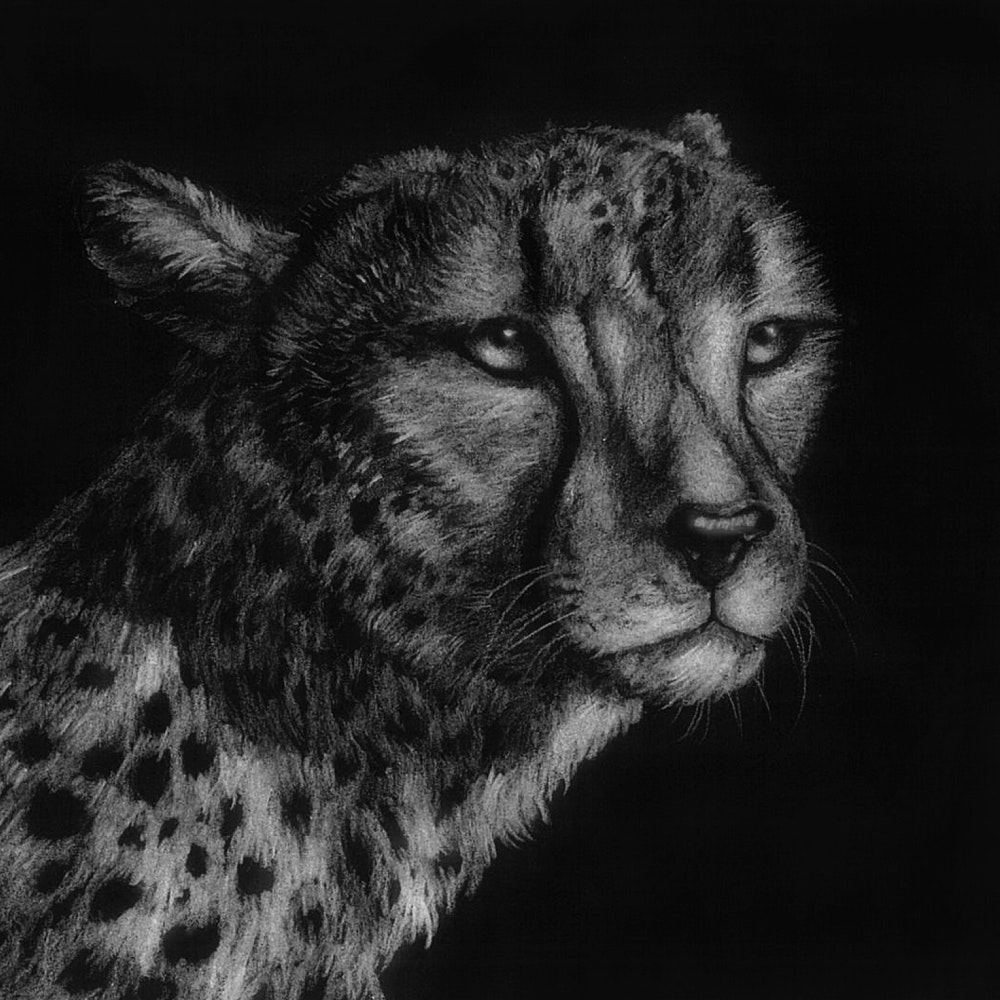 Cheetah with a beautiful spotted coat