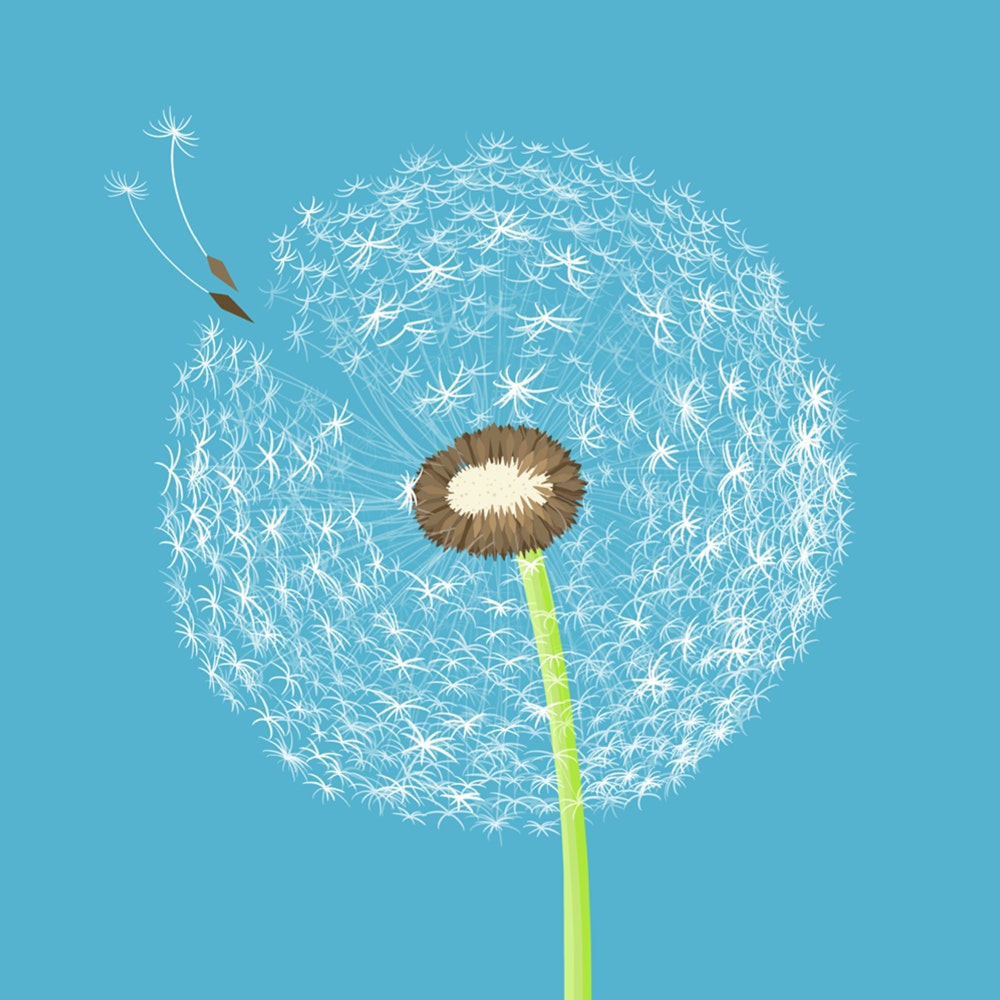 Dandelion seeds floating away