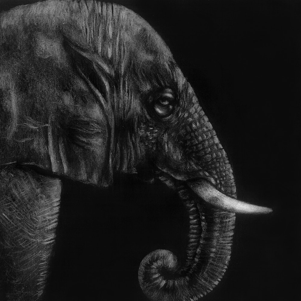 Elephant with large tusk and trunk
