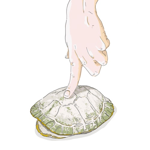 Finger pressing down on a turtle shell