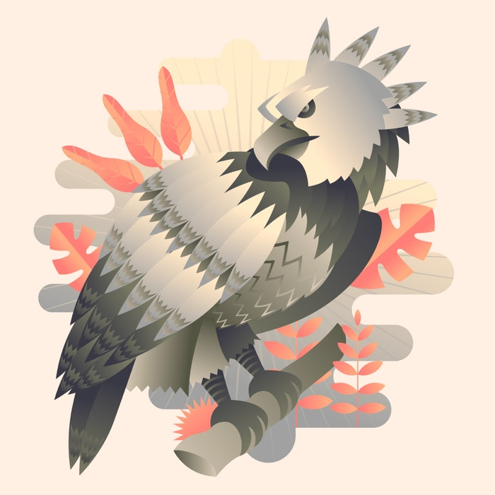 Harpy Eagle standing on a tree limb