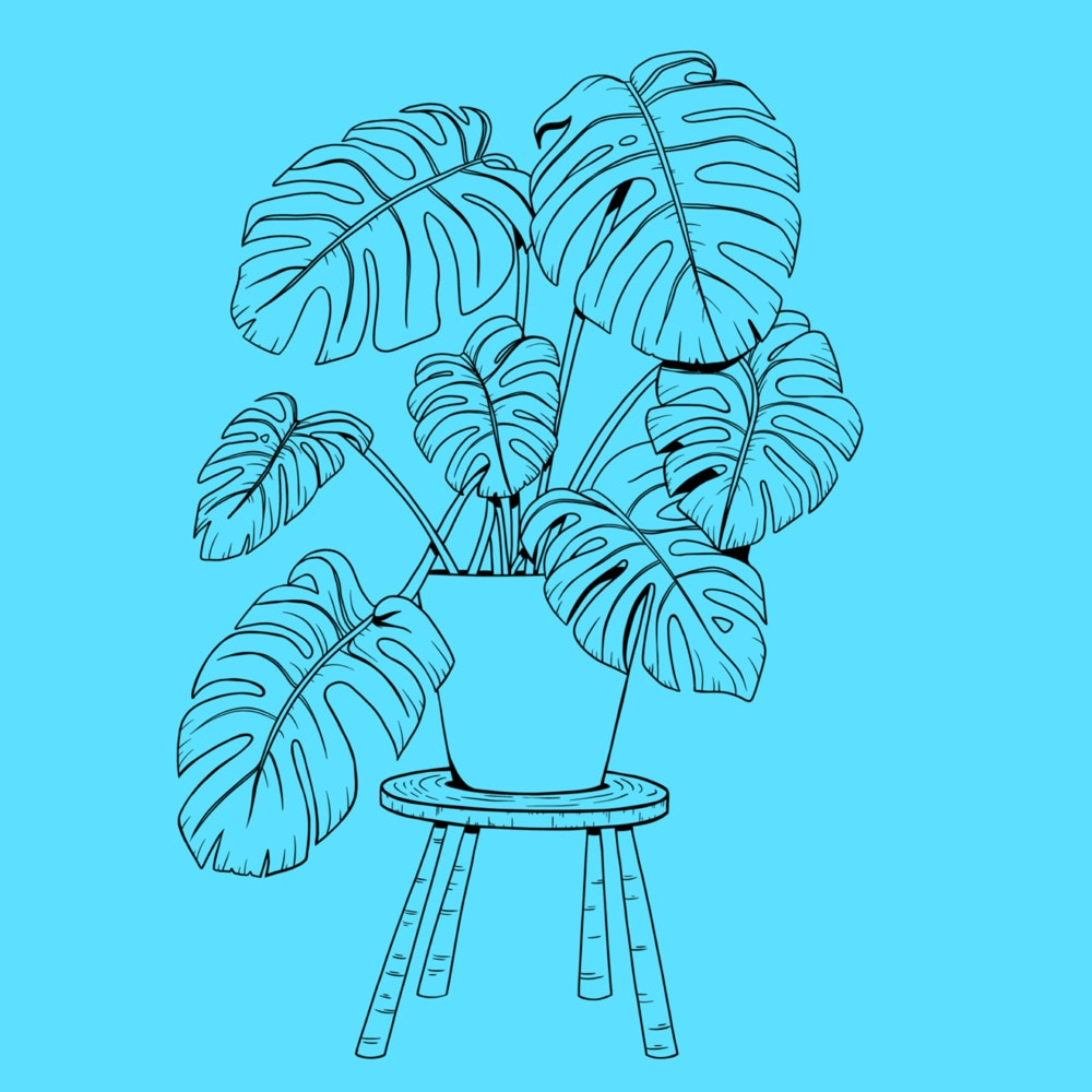 Leafy houseplant on a small stool