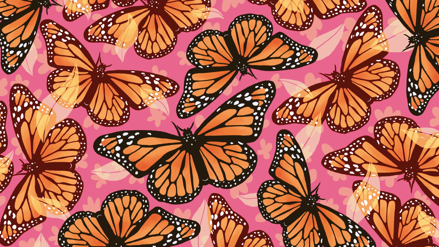 Monarch Butterflies with beautiful wings