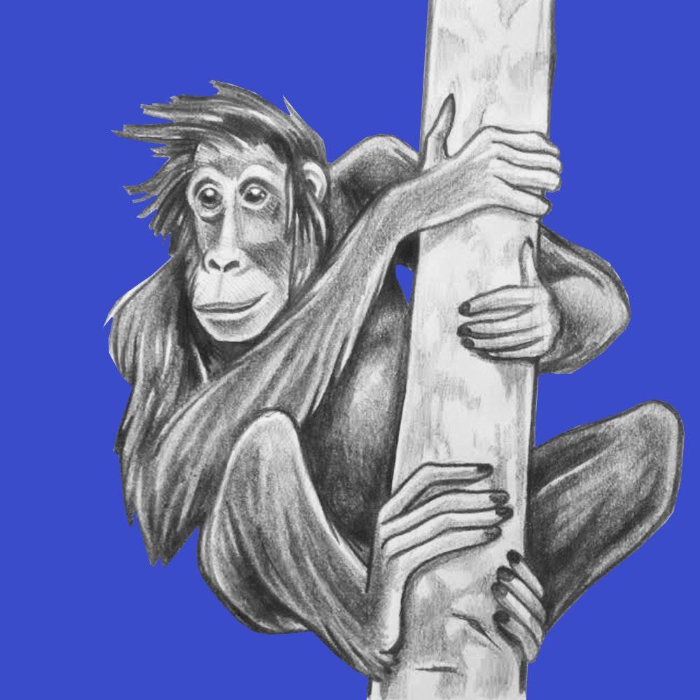 Orangutan playing in the trees