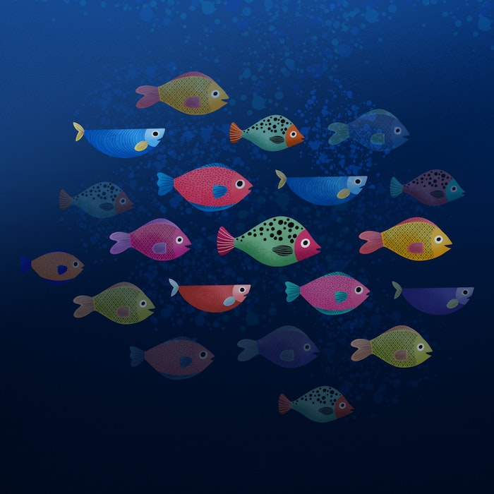 School of brightly colored fish swimming together
