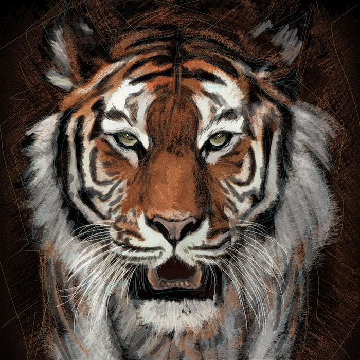 Tiger with an open mouth and sharp teeth