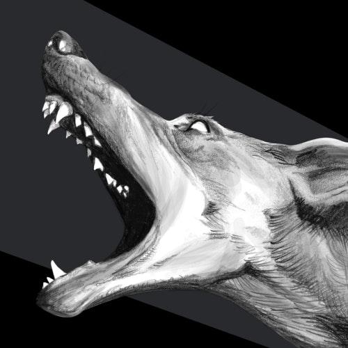Wolf with sharp teeth, barking