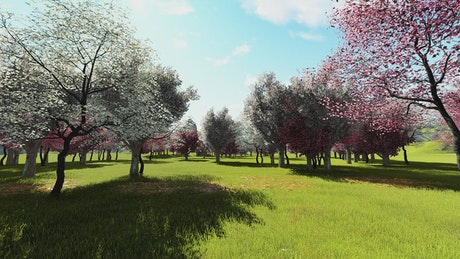 3D animation of a garden in spring