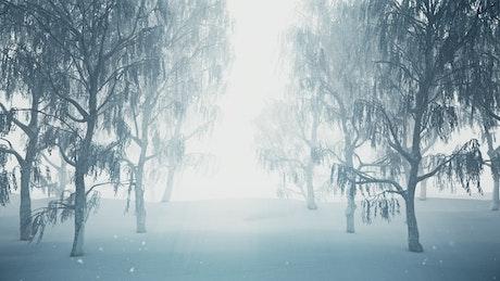 3D tour through a snowy forest