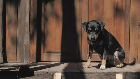 A black dog taking the sun in the door