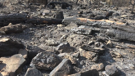 A burned forest and ashes