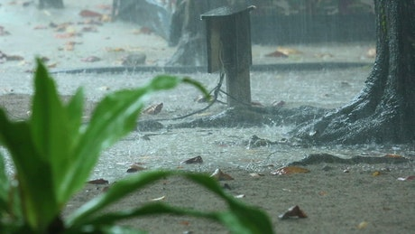 A downpour and tree close up