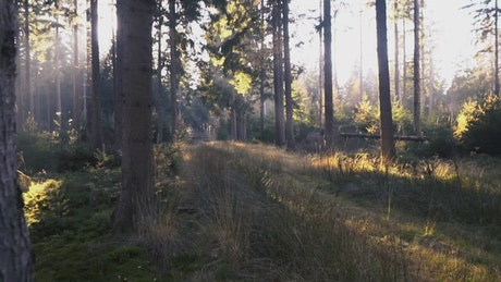 A forest with trees and grass