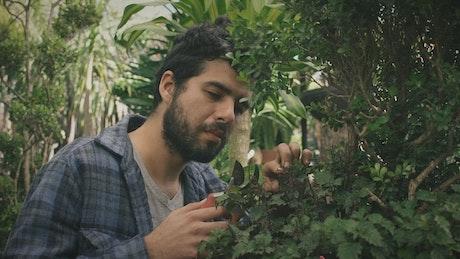 A gardener cutting leaves