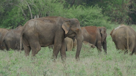 A herd of elephants in a green valley
