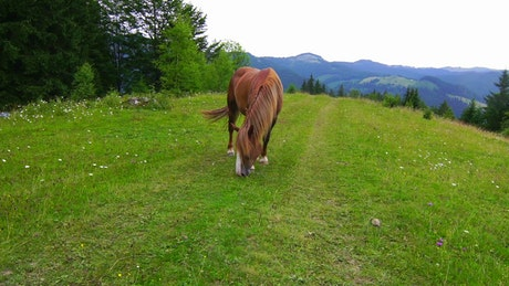 A horse grazing in a mountain meadow
