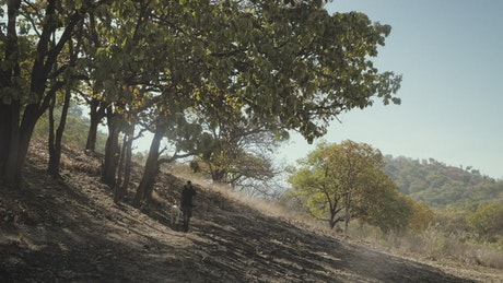 A man and his dog walking in a forest on a sunny day
