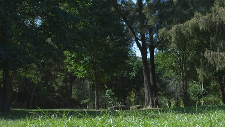 A man riding his bicycle at the park