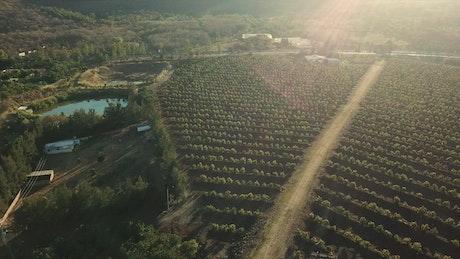 A road between a big green agriculture field
