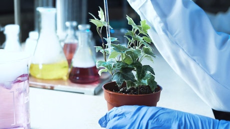 A scientist dropping a substance on a plant
