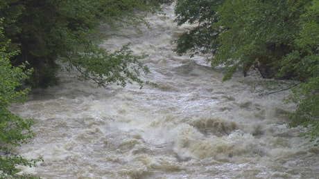 A Wild river between the trees