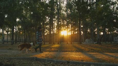 A woman walks through a park with a dog