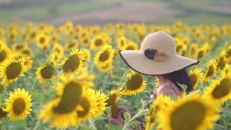 A young woman walking in a sunflower field