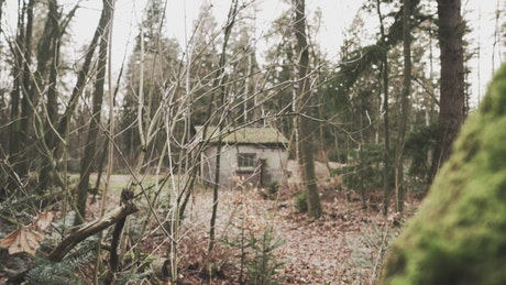 Abandoned shed in a forest in autumn