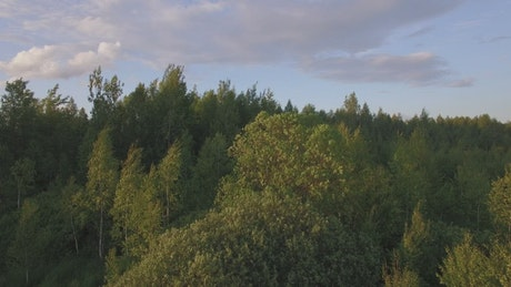 Above a forest in the evening