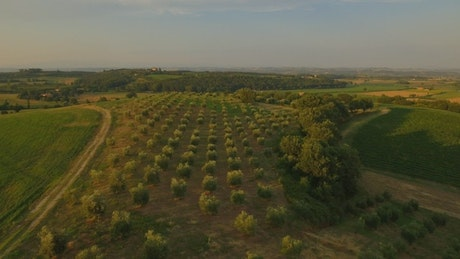 Aerial flyover of green fields and orchards