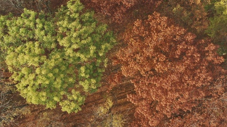 Aerial rotating view of an autumn forest