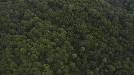 Aerial shot of a forest covered with trees and vegetation