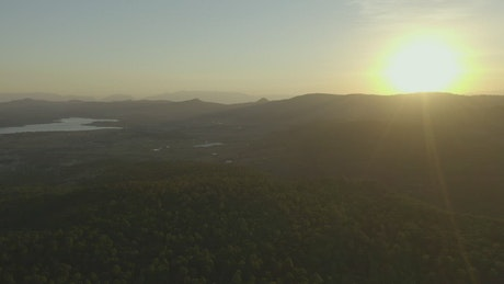 Aerial shot of a large forest covering the landscape at sunset