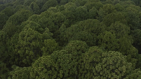 Aerial tour of a dense forest full of trees