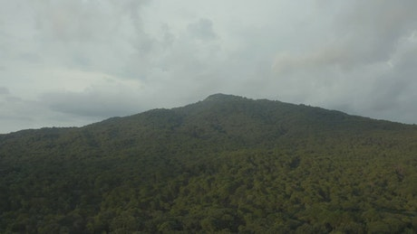 Aerial tour through a large forest that covers a mountain range