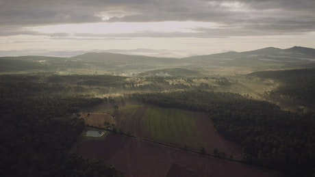Aerial view at dawn of a crop field and forest