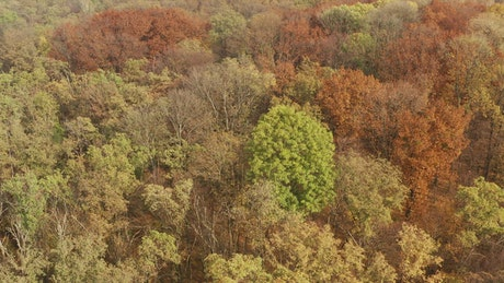 Aerial view of a beautiful autumn forest