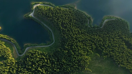 Aerial view of a forest, a Lake and the road